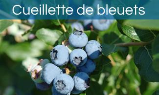 Cueillette de bleuets